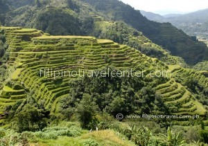 Banaue Rice terraces Tour