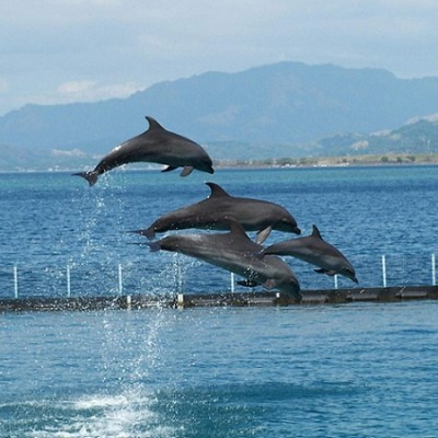 Subic Dolphin Show