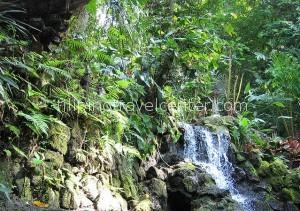 tropical vegetation Hidden Valley Springs
