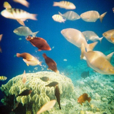Balicasag island Bohol Philippines snorkeling