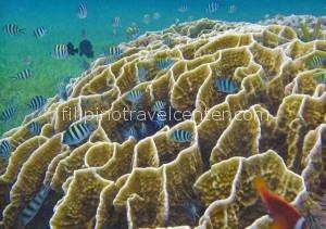 Camiguin Island snorkelling