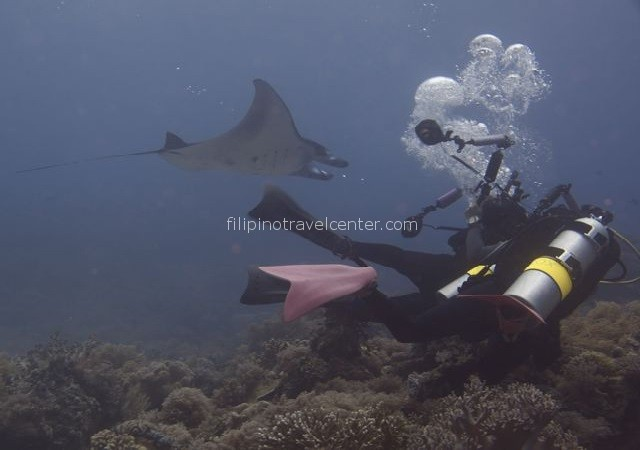 Dive Ticao Island & Snorkel with Whaleshark