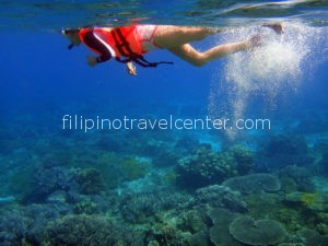 Apo Island Marina sanctuary snorkeling