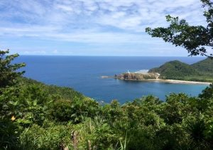 Dicasalarin-Cove Baler