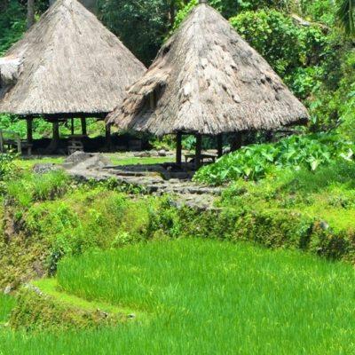 Banaue and Sagada rice terraces of the Phillipines