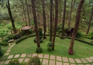 Le Monet Hotel Baguio fine trees