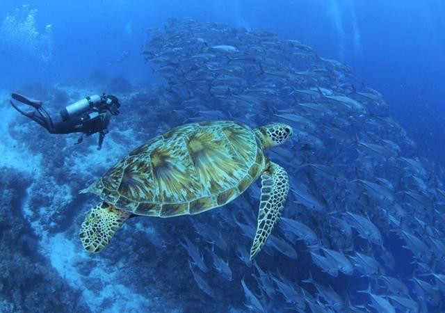 Balicasag Island Diving