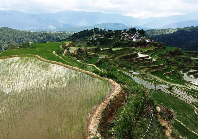 Maligcong Rice Terraces view