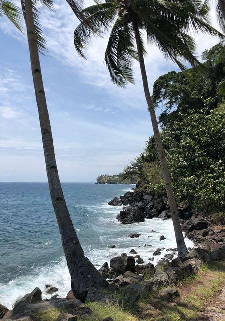 Camiguin Coastline with Coco Tree